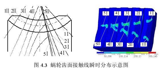 环面蜗杆蜗轮副双线接触示意图.jpg