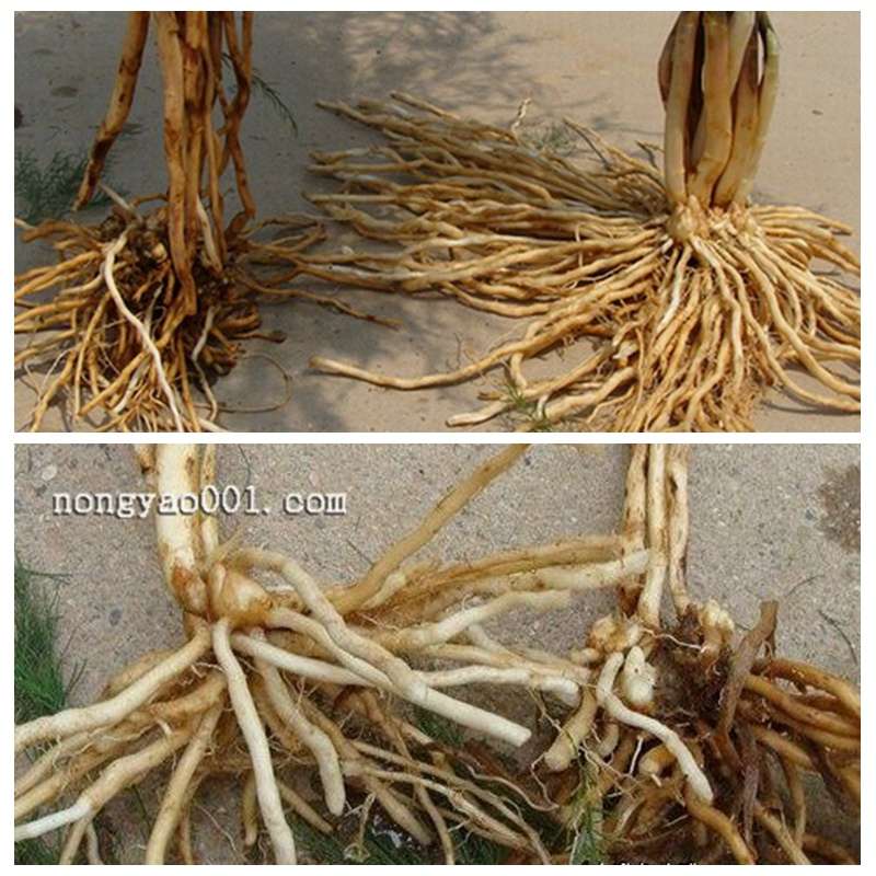 海草Microbial Root Rot Healer Fertilizer