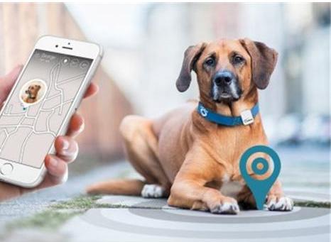 智能宠物项圈, 智能项圈, 宠物训练器-可定位宠物位置