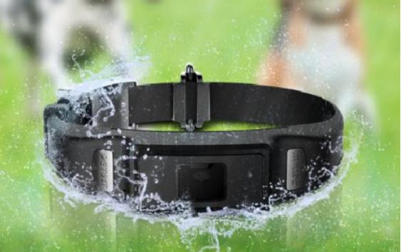 百强橡塑-宠物项圈(狗项圈)带拥有优质的防水层