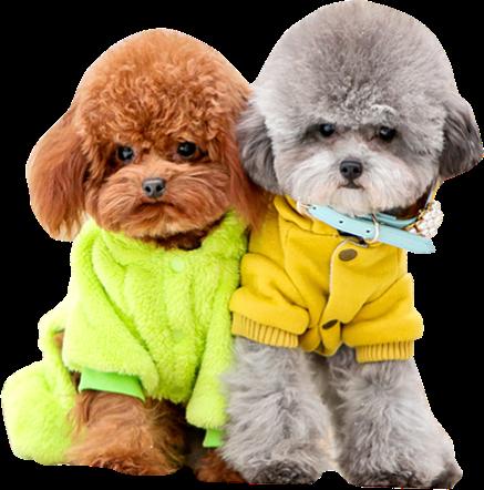百强橡塑-13年经验专注于-狗项圈,宠物项圈,宠物定位器研发生产